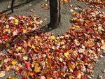 ベルリンの秋