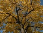 ベルリンの秋 4