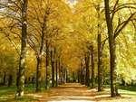 秋のポツダム