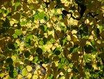 秋のポツダム 2