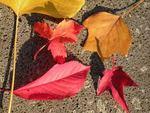 ドイツの秋 3